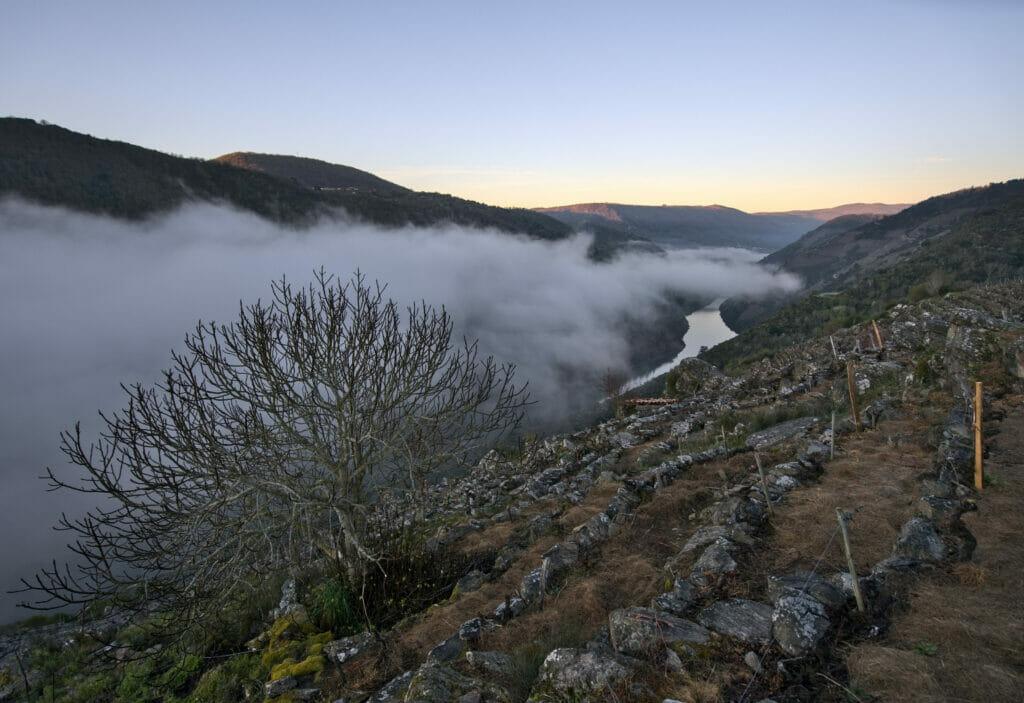 lever de soleil sur les vignobles de la Ribeira Sacra