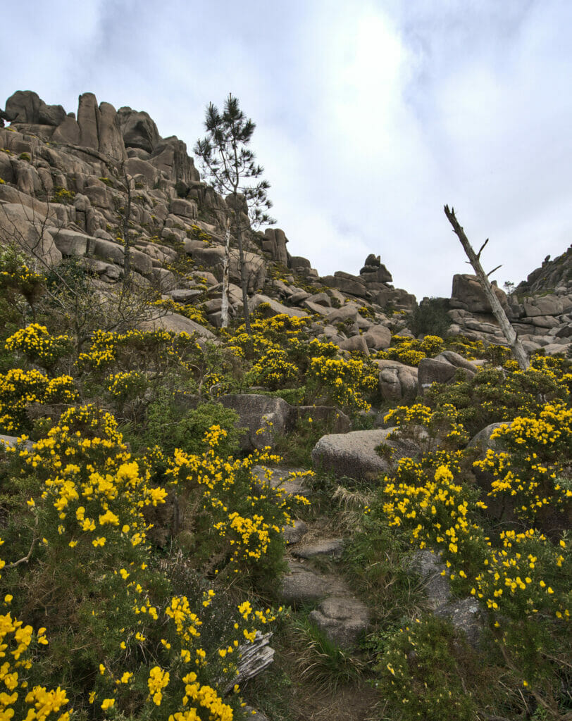 vegetation au monte pindo