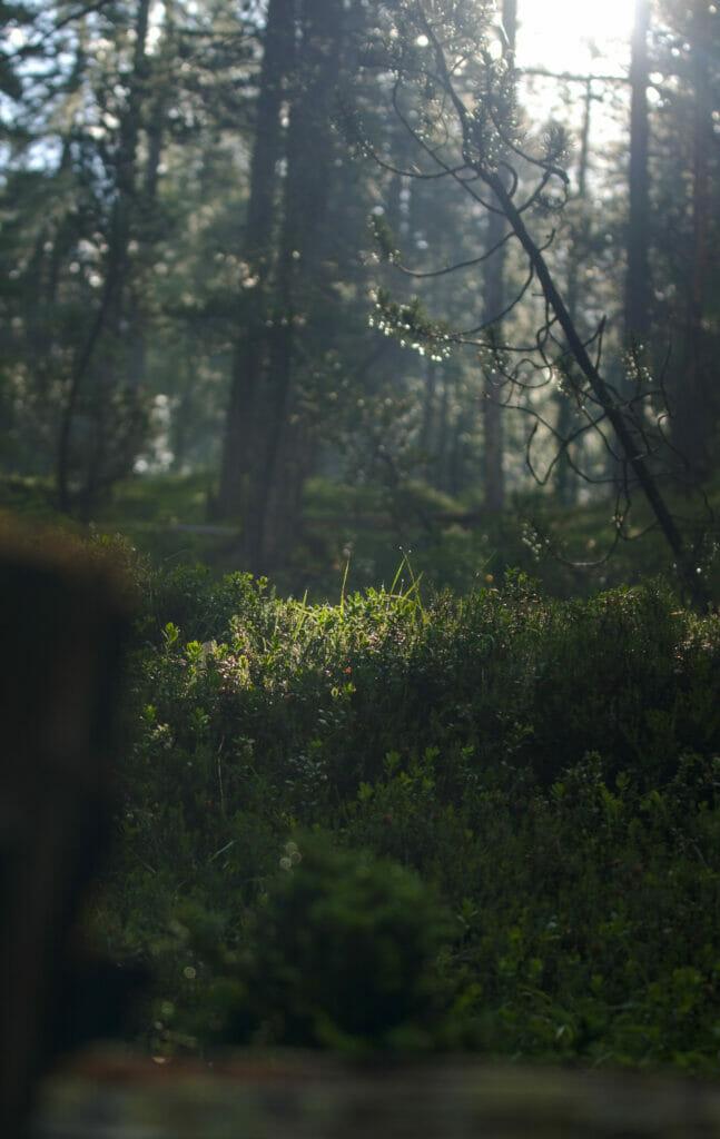 forêt parc national suisse