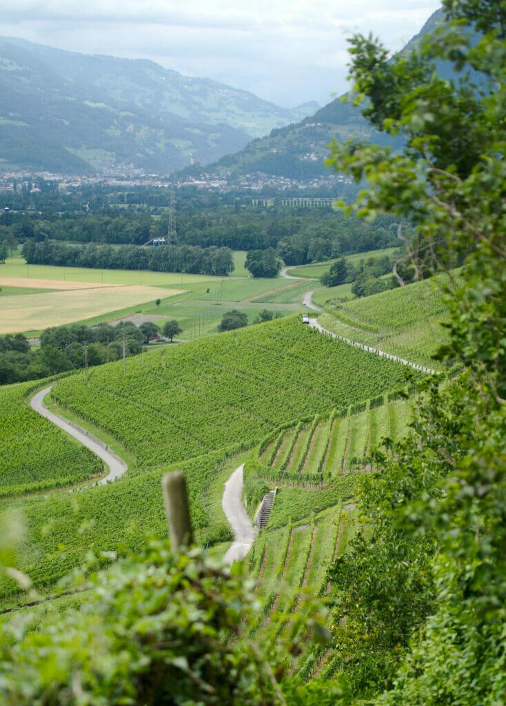 vins des grisons
