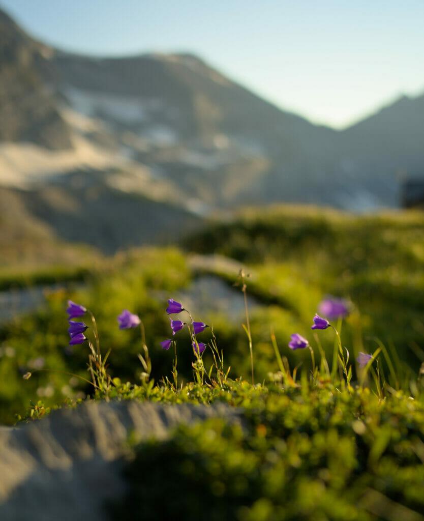 les fleurs de susanfe