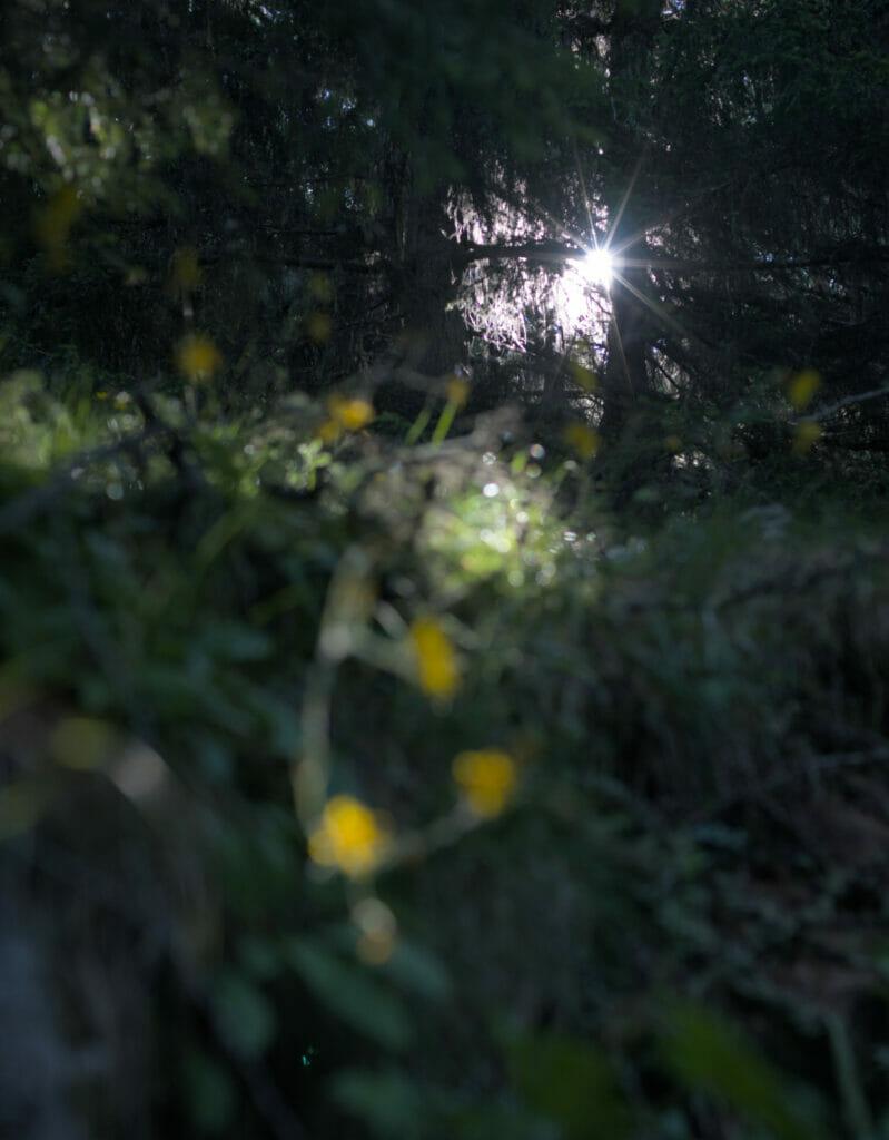 le soleil qui traverse la forêt